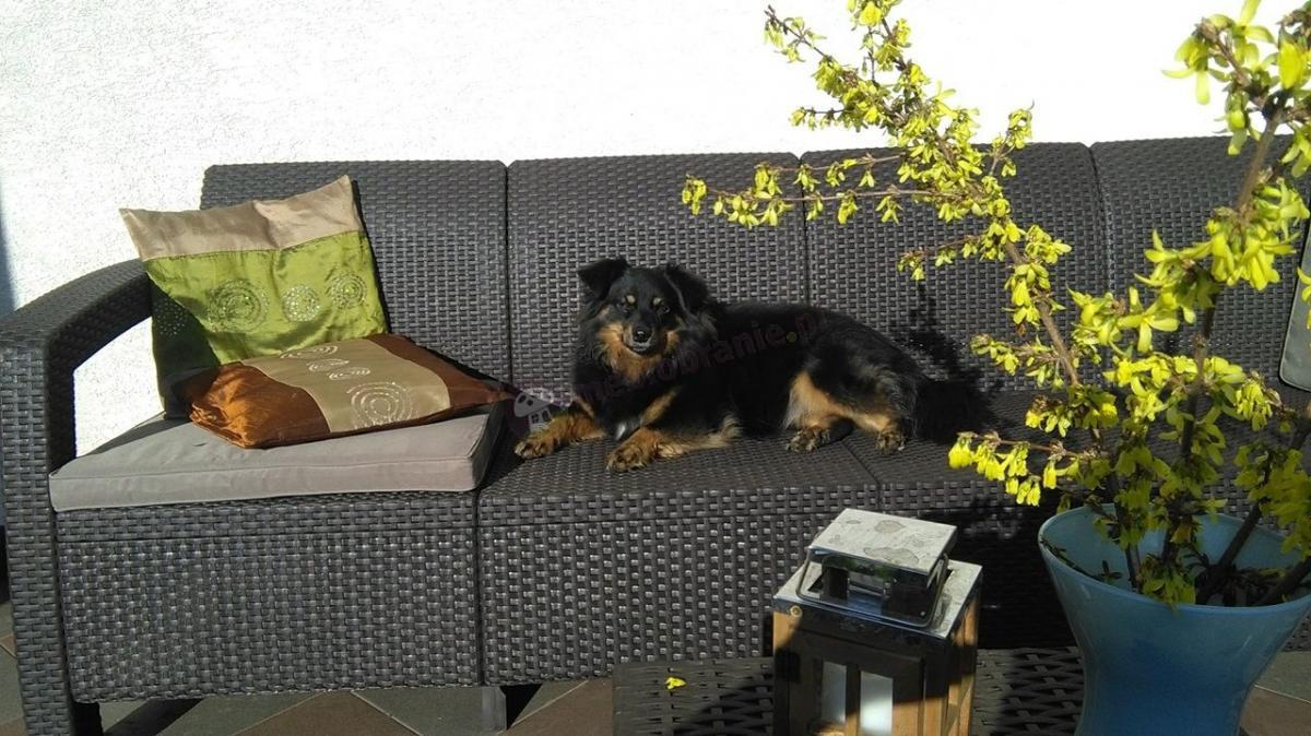 Brązowa sofa ogrodowa technorattan Corfu Love Seat Max na tarasie