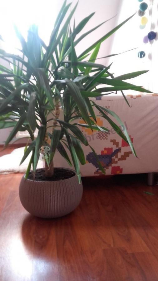Doniczka wyplatana z haftowanym obiciem sofy w tle