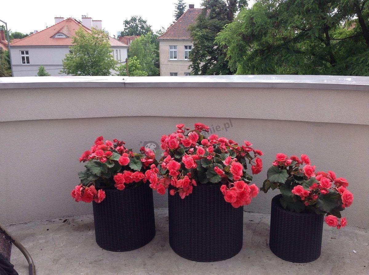 Doniczki balkonowe brązowe z pięknymi roślinami