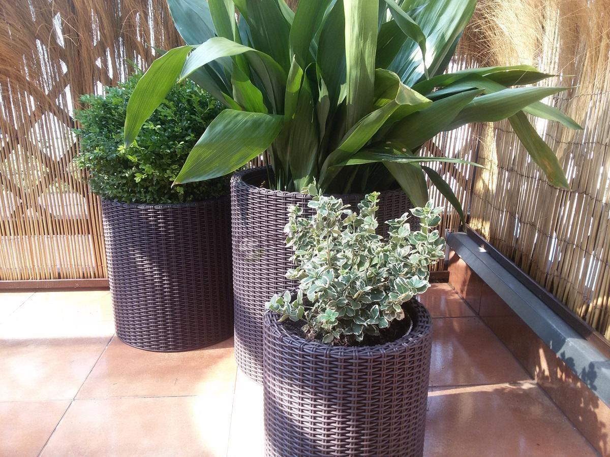 Doniczki balkonowe rattanowe obsadzone zielonymi roślinami