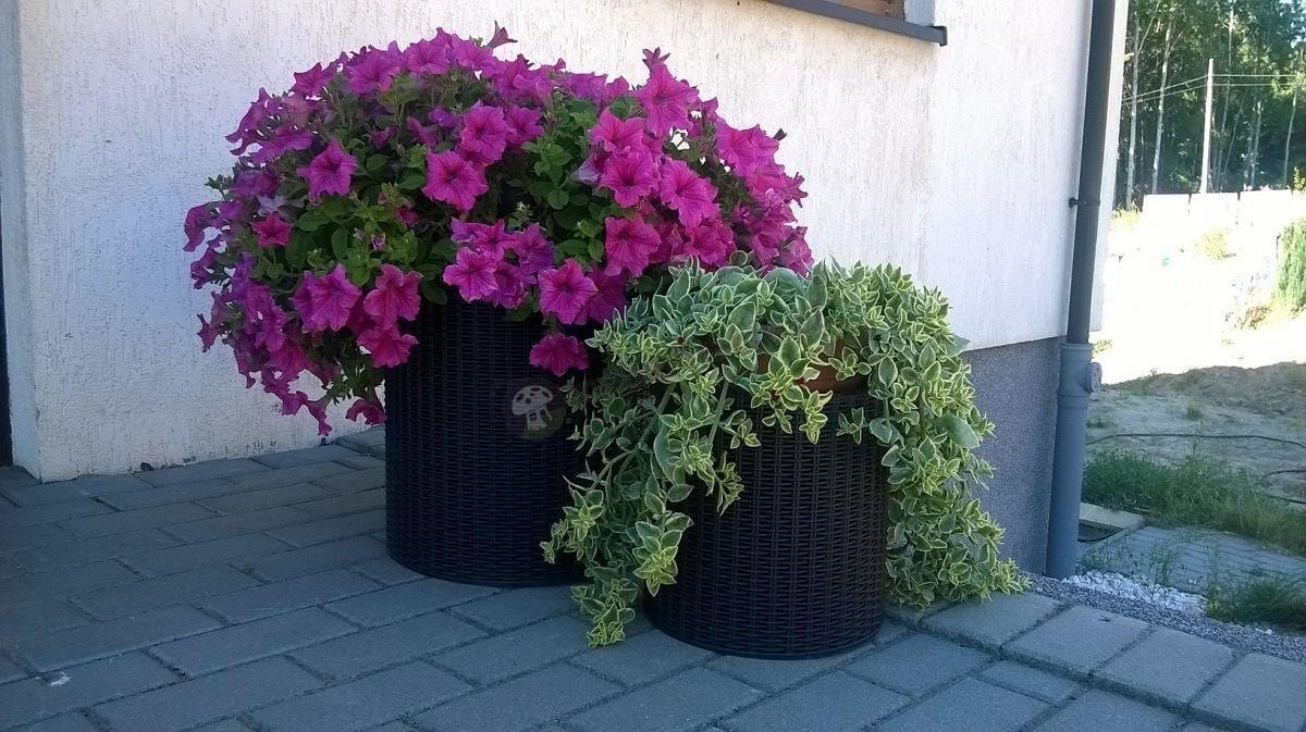 Doniczki cylindryczne stanowiące oprawę dla bujnych roślin
