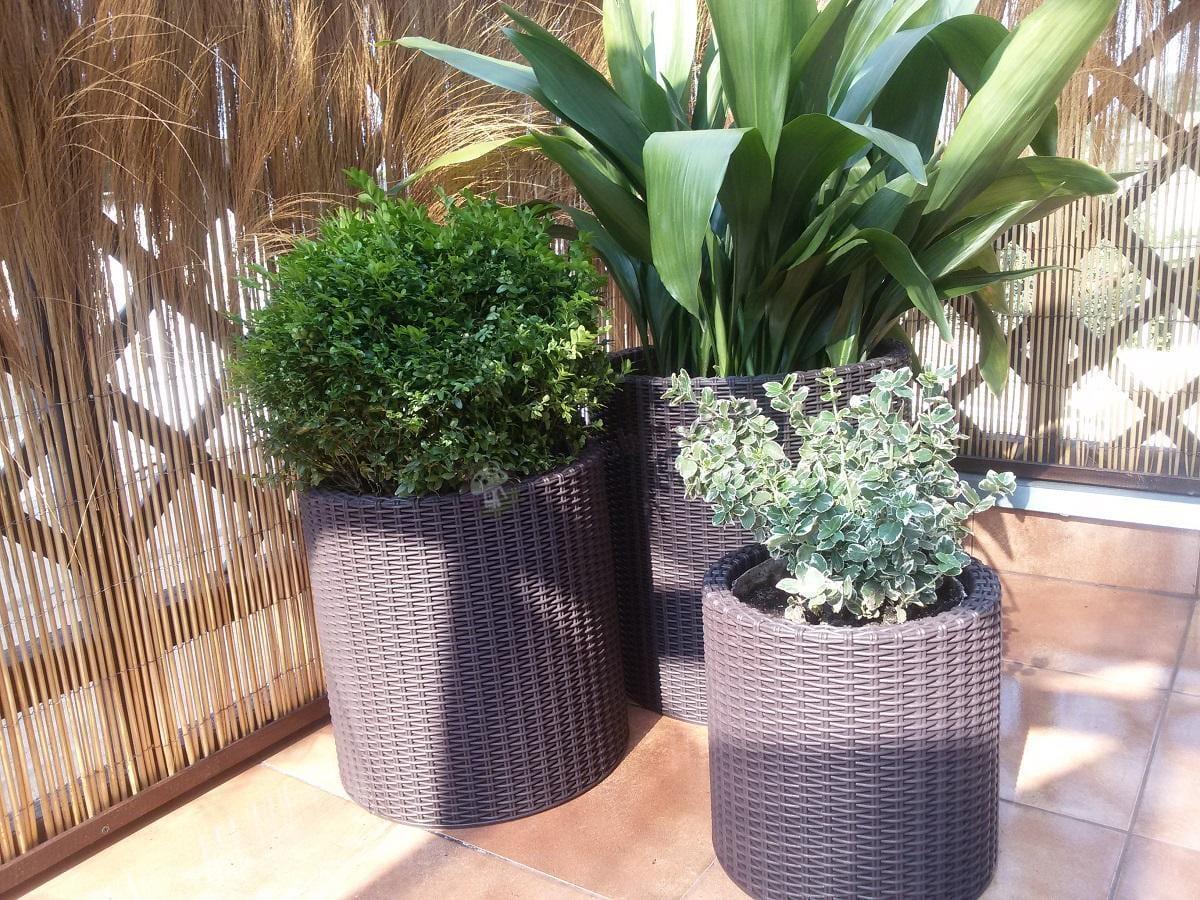 Doniczki tarasowe brązowe z bujnymi zielonymi roślinami