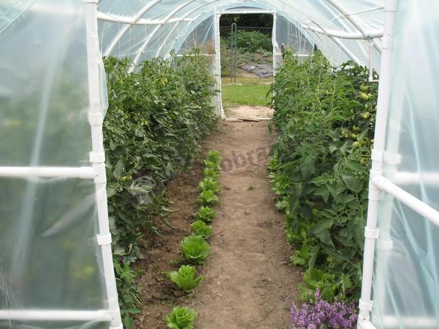 Foliak na pomidory i inne warzywa w środku sezonu
