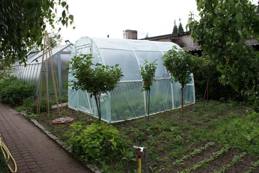 Foliak w pięknym ogrodzie na tle szklarni