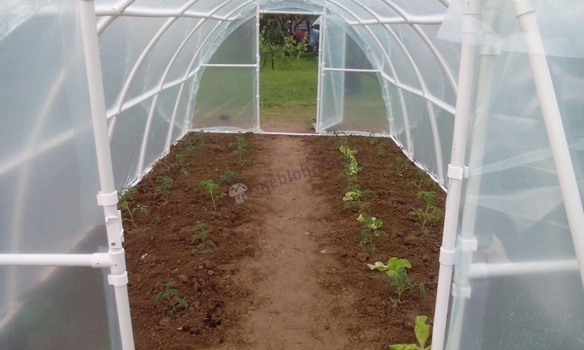 Lemar tunel foliowy 3x6 chroniący młode sadzonki warzyw