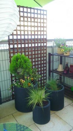 Doniczki Na Balkon Z Kolorowymi Roślinami Aranżacje