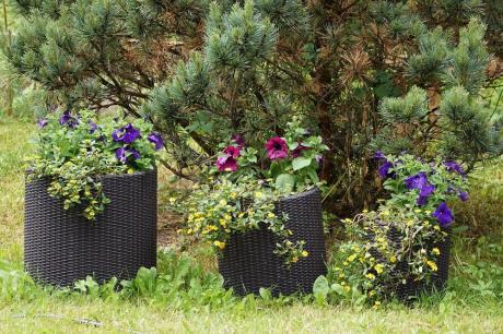 Doniczki Plastikowe Brązowe Wypełnione Kolorowymi Kwiatami