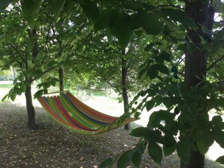 Kolorowy hamak z drążkiem zawieszony między drzewami