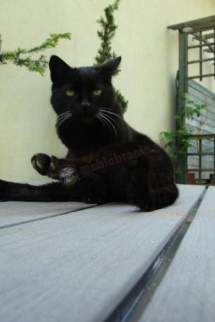 Skrzynia tarasowa z siedziskiem zajęta przez czarnego kota