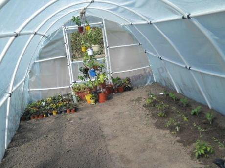 Szklarnia ogrodowa foliowa pełna doniczek z sadzonkami