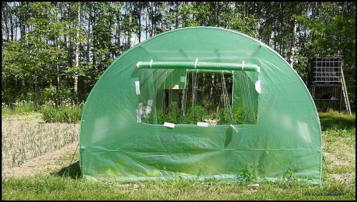 Ogrodowy tunel foliowy z oknem wyciętym przez klienta