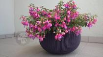 Purpurowa donica balkonowa na kwiatki ze wzorem Cozies M