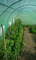 Tunele foliowe o konstrukcji metalowej do hodowli warzyw