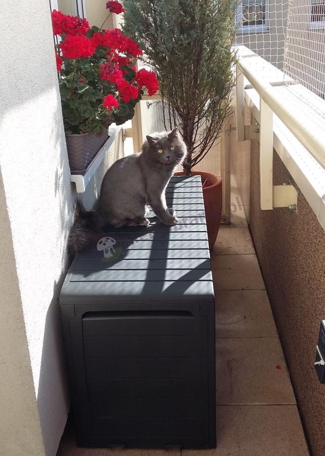 Skrzynia ogrodowa Marvel Box stojąca na wąskim balkonie