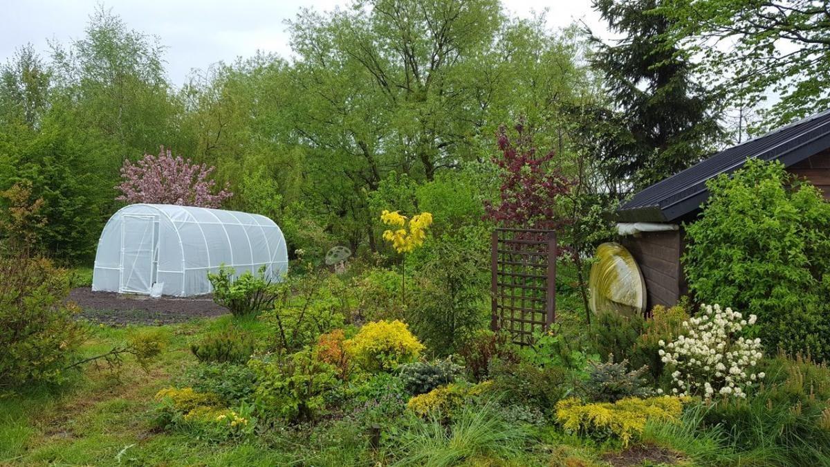 Tunel foliowy na pomidory używany w pięknym ogrodzie