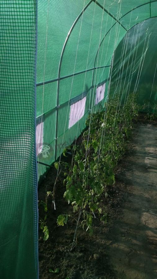 Tunel foliowy ogrodowy szklarnia ogrodowa do uprawy warzyw