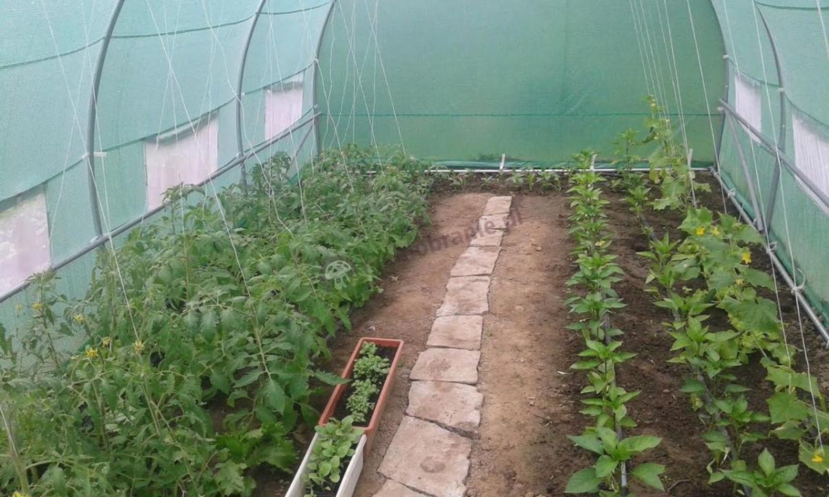 Tunel ogrodniczy używany do ochrony uprawy warzyw