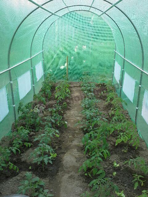 Zielony ogrodniczy namiot foliowy do uprawy warzyw