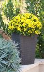 Plastikowa doniczka na kwiaty Keter