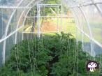 Tunel ogrodowy - wnętrze